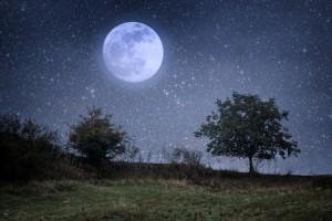 2月の月のリズムは、「自分らしさ」を楽しく追及するのにぴったり