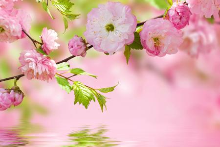 この春からの自分を占う【桜診断】満開に咲いている桜は何色?