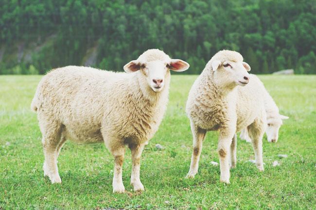 2015年の目標がわかる【心理テスト】ピンク、黄、青、緑、金……羊に色を塗るなら何色?