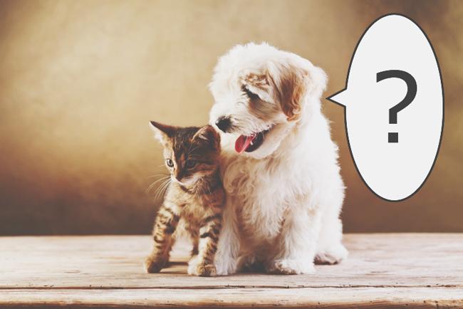 【心理テスト】犬は猫になんて言っている? 答えでわかるあなたの未来のダンナ様