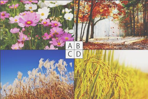 【心理テスト】惹かれる秋の風景でわかる、あなたが飢えていること
