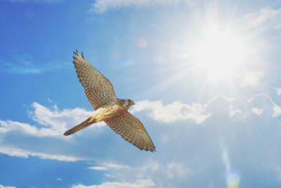 【夢占い】鳥の巣の夢は近々プロポーズされる暗示!