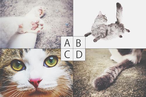 【心理テスト】猫のどこが好き? 答えでわかるあなたを狂わせる男性