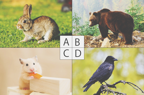 【心理テスト】生まれ変わりたい動物でわかる、成功するためのヒント