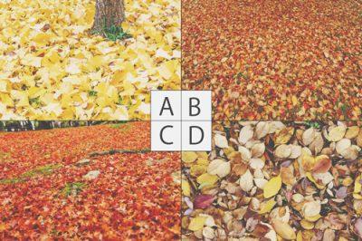 【心理テスト】落ち葉の写真でわかる心のカサつき具合