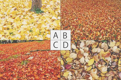【心理テスト】気になる落ち葉の写真でわかる、あなたの心のカサつき具合