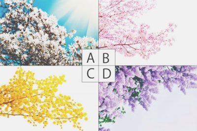 【心理テスト】魔法で咲かせたい花はどれ? 答えでわかるあなたの「魅せたい私」