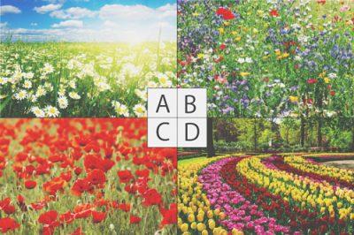 【心理テスト】思い浮かべた花畑でわかるあなたの妄想力