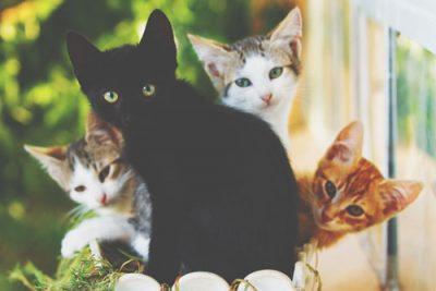 【夢占い】黒猫の夢は幸運が訪れる予感!