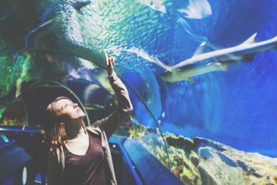 【8月の開運方位】ラッキー方位は「北」、水族館になど涼しげで落ち着ける場所へ出かけよう!