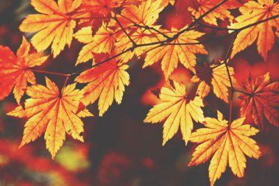 【夢占い】紅葉の夢は将来の不安のあらわれ 秋の夢が暗示することとは?