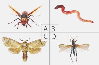 【心理テスト】嫌いな虫でわかる絶対に守るべきこと