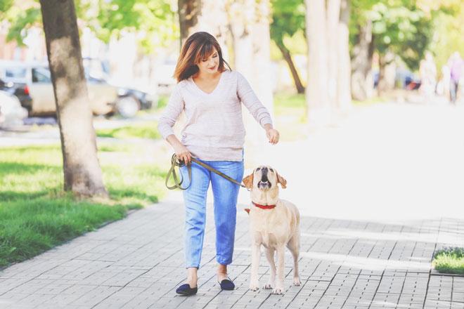 【心理テスト】初めての犬の散歩でわかる! 自分の感情をコントロールできているかどうか