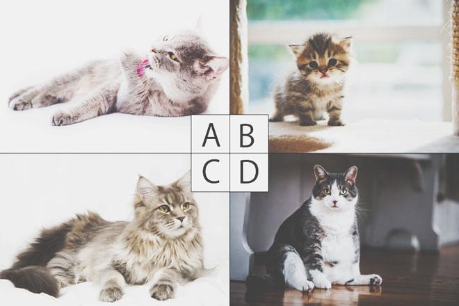 【心理テスト】犯人はどの猫? 答えでわかる、あなたが判断ミスをしてしまうワケ