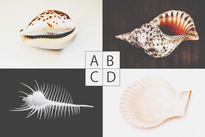 【心理テスト】貝殻のメッセージを聞く? 答えでわかる幸せな恋のために受け入れること