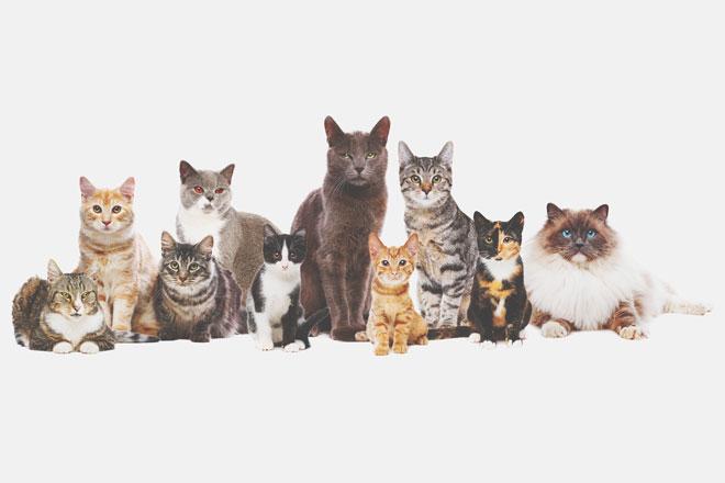 【心理テスト】懐いてきた猫はどれ? 答えでわかる相性のいい同性タイプ