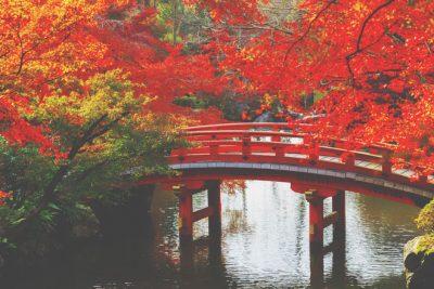 【10月の開運方位】ラッキー方位は「南」、紅葉狩りに出かけて秋の陽の光を浴びよう!