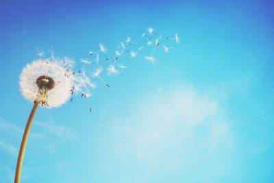 【心理テスト】風に乗って飛ばされているものは何? 答えでわかるあなたが縛られているもの