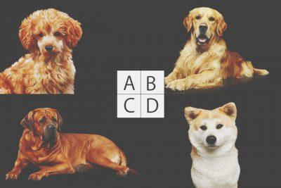【心理テスト】あなたの元にこない犬はどれ? 答えでわかる、あなたが苦手とする友人タイプ