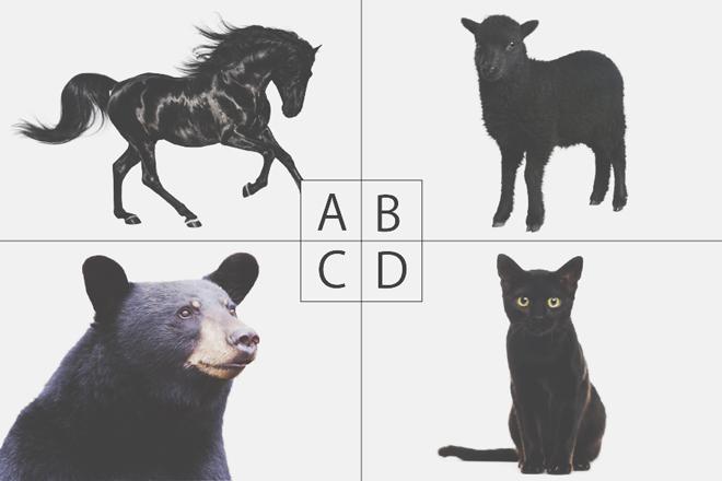 【色×コト占い】「黒」からイメージする動物は? 答えでわかる、あなたが秘めている能力