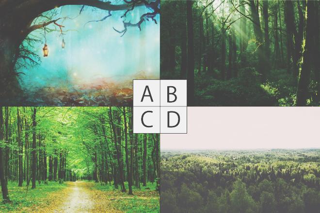 【心理テスト】あなたの「森」のイメージは? 答えでわかる真実の自分の姿