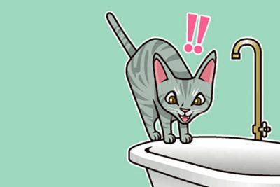 【心理テスト】この猫は何に驚いた? 答えでわかる、深層で恐怖を感じているもの