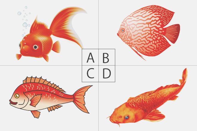 【色×コト占い】「赤い魚」といえば? 答えでわかる現在上昇している運気