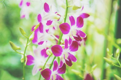 【9月の開運壁紙】恋愛運は「ランの花」、金運は「キャンディー」の画像で運気アップ!