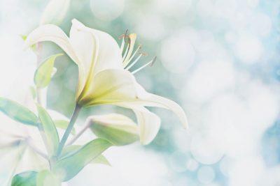 【夢占い】恋の予兆を感じさせる花の夢