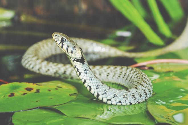 【夢占い】ヘビに噛まれる夢は情熱的な恋の始まり! ヘビの夢が暗示すること