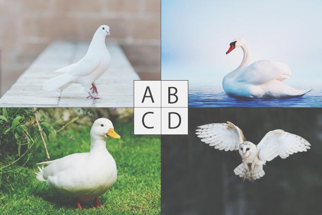 【色×コト占い】「白い羽根」で連想した鳥は? 答えでわかる、あなたへの天界からのメッセージ