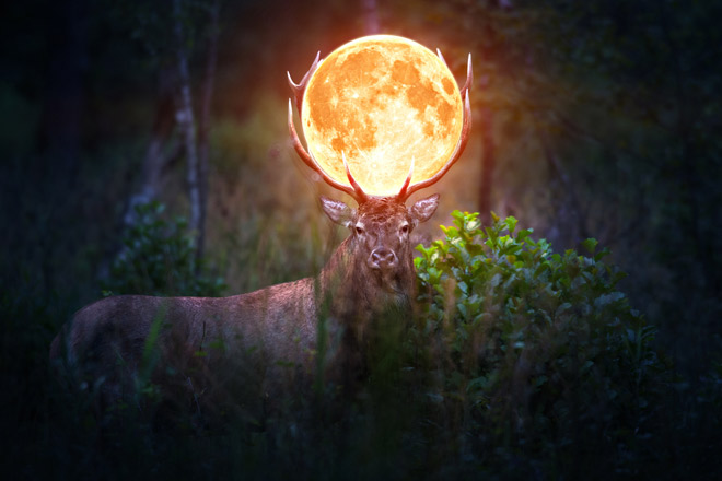 満月の呼び名 バックムーン