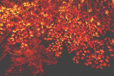 【10月の開運方位】吉方位は「南」、ライトアップされた紅葉が吉!